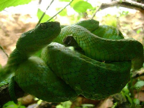 Especies mexicanas en peligro de extinción: Nuestra