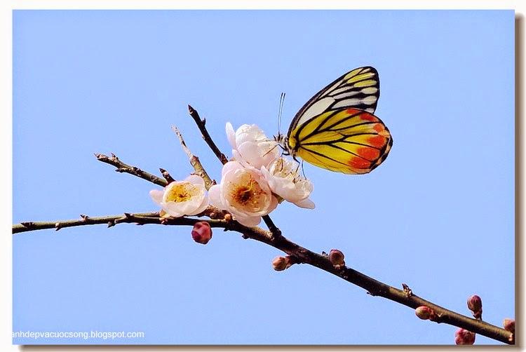 Con bướm xuân 9