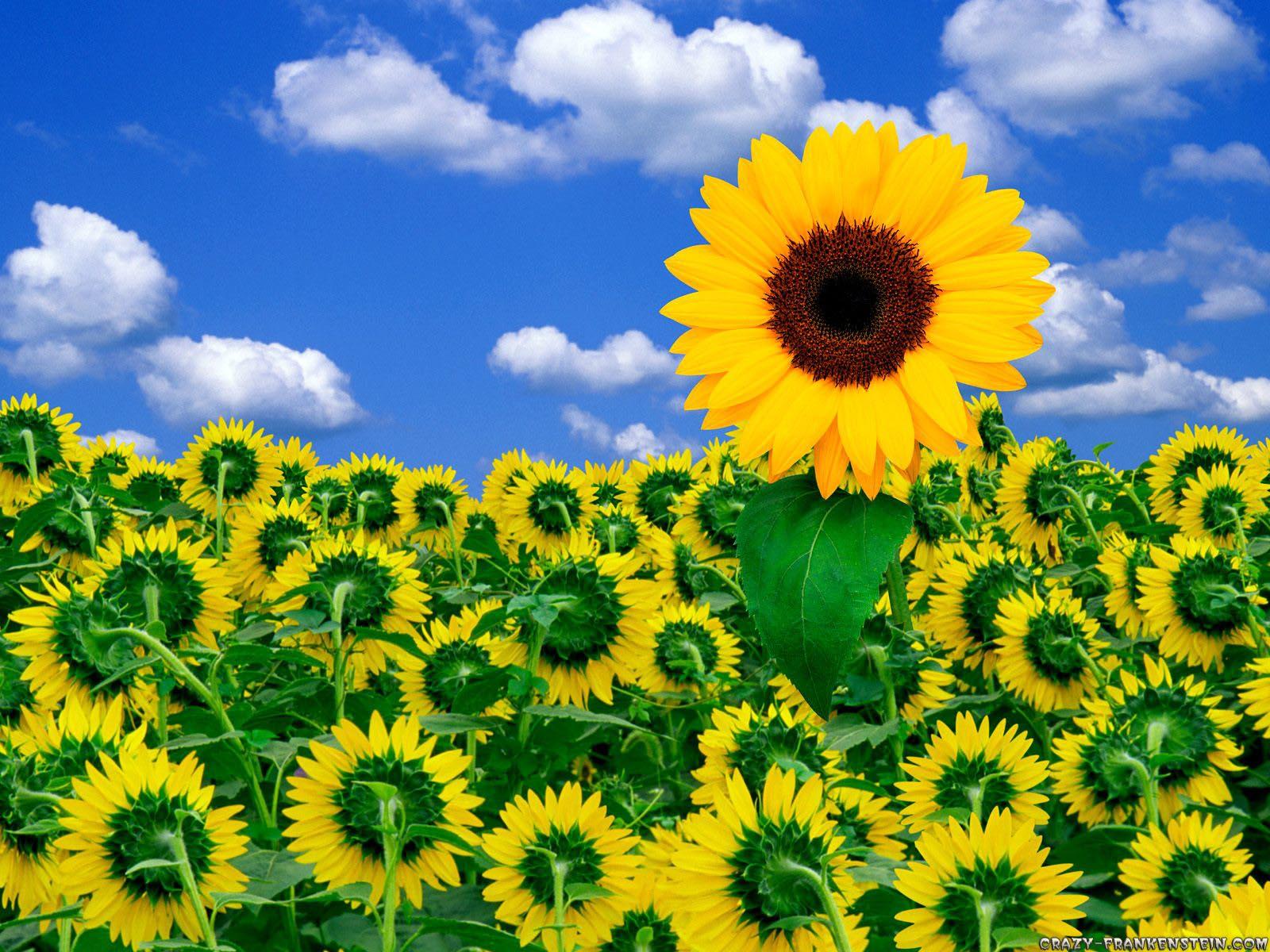 http://2.bp.blogspot.com/-F5ZZkkvY8m8/T2SErZPqiTI/AAAAAAAADP4/_-265FiJJ4Q/s1600/sunshine-wallpaper-4-755666.jpg