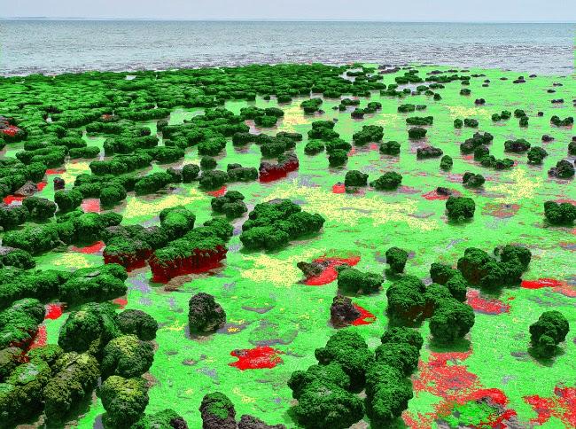 Proterozoic: Stromatolite Shoreline with Bacterial Mats