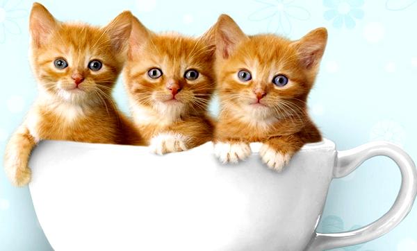 Fakta Ilmiah Kenapa Kucing Takut Air | INKAFA
