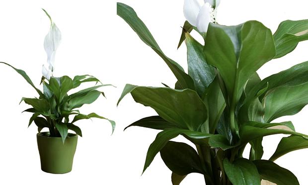 plantas jardins vasos:Flavio lemos jardins: Plantas para vasos