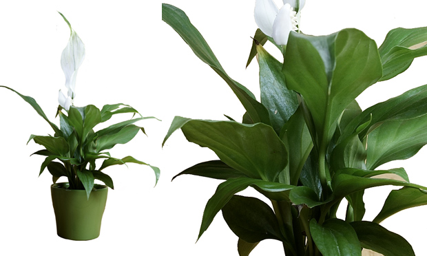 plantas jardim de sol:Flavio lemos jardins: Plantas para vasos