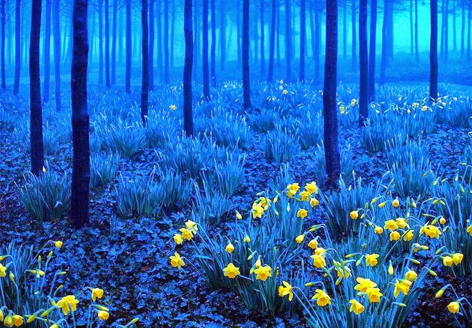 Fotografiunik Foto Hutan Terindah Di Dunia