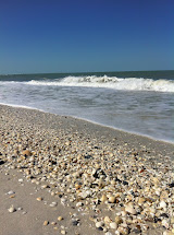 Shell Barefoot Beach Preserve