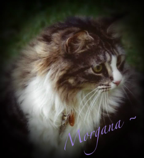 ~ In Memory Morgana ~
