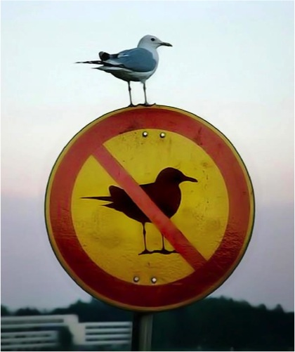 seagull-sign.jpg