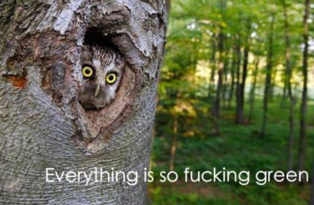 funny, owl