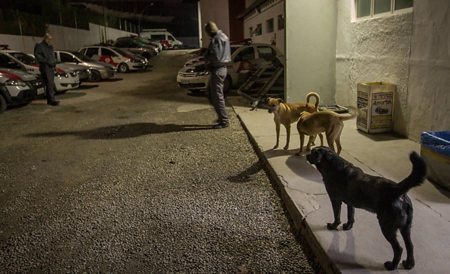 """Adotados por policiais militares, cães vivem e """"tomam conta"""" de delegacia na zona norte de São Paulo"""