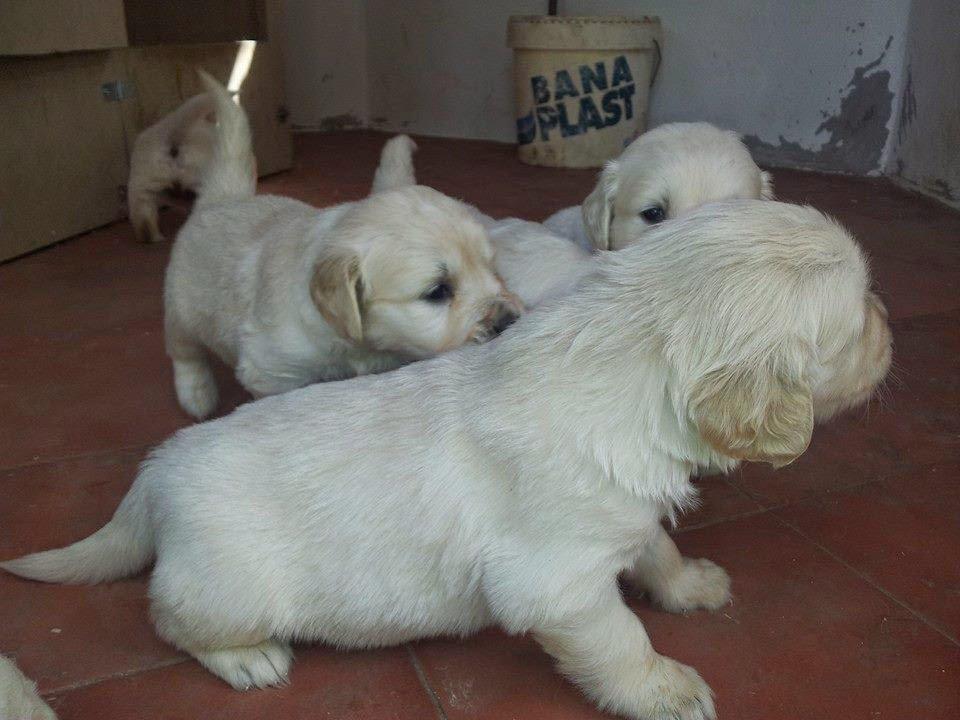 Detalle de los cachorros nacidos en Marzo