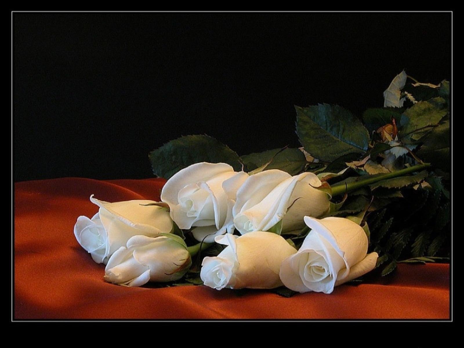 http://2.bp.blogspot.com/-F7o1jAIfN9A/Tj7pG2ISEgI/AAAAAAAAD54/PvvvHelcQRA/s1600/trandafiri_albi_frumosi.JPG