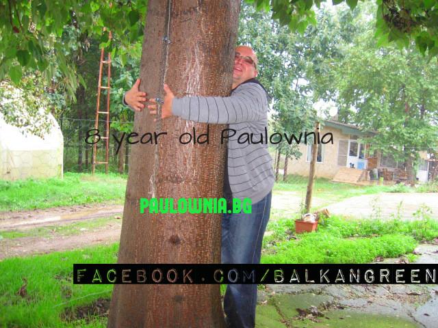 paulovnija, carsko drvo,foto printskrin