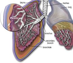 What Is Mesothelioma All About Mesothelioma Prognosis