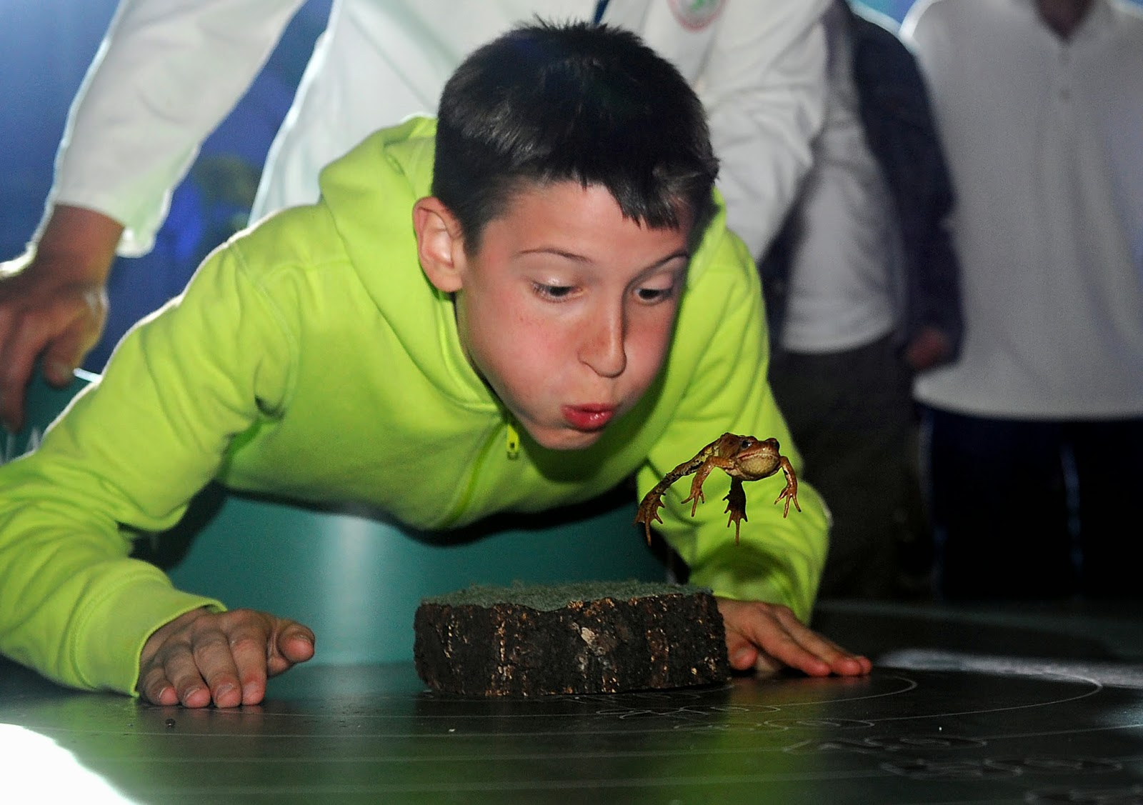 Frognight - Frog Jumping Competition 2014