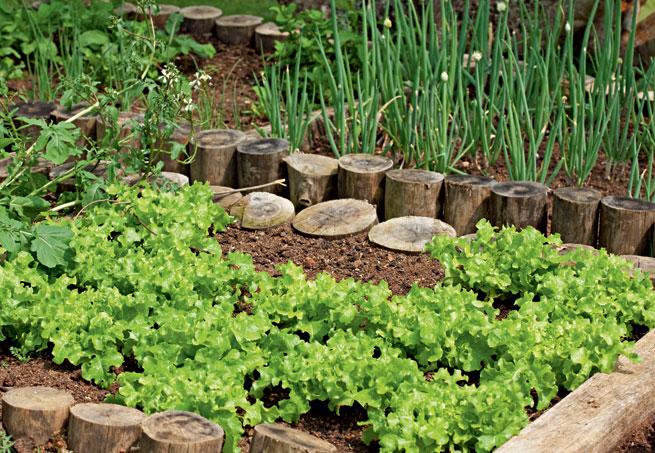 jardim vertical hortalicas:Página Verde: Vantagens de se ter uma horta em casa
