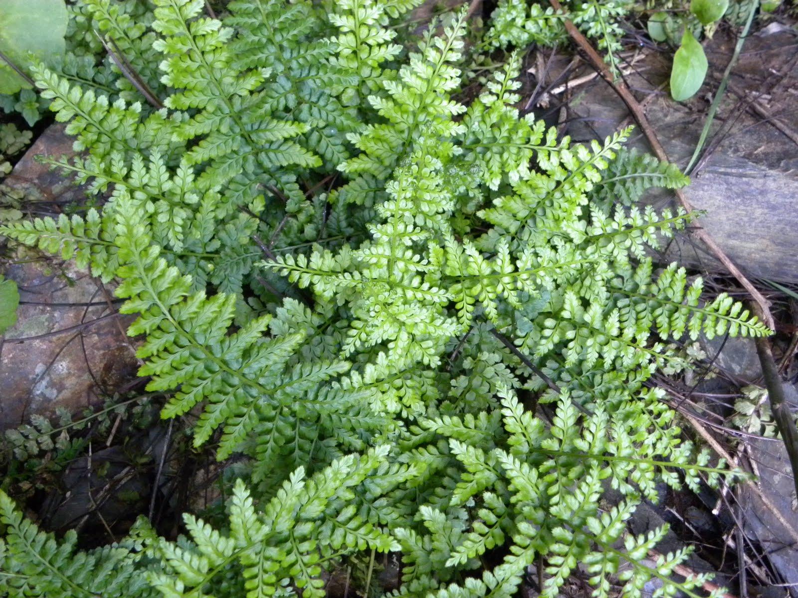 Las plantas y los hongos actividad 10 c mo hay for Plantas sin semillas