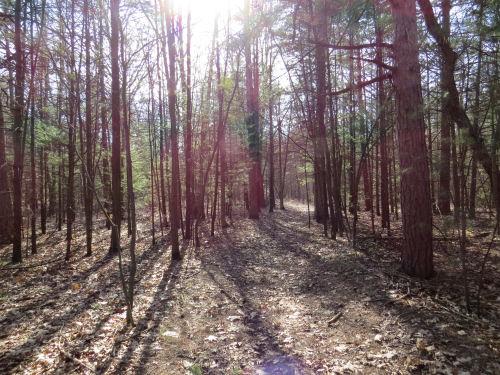 Ludington School Forest