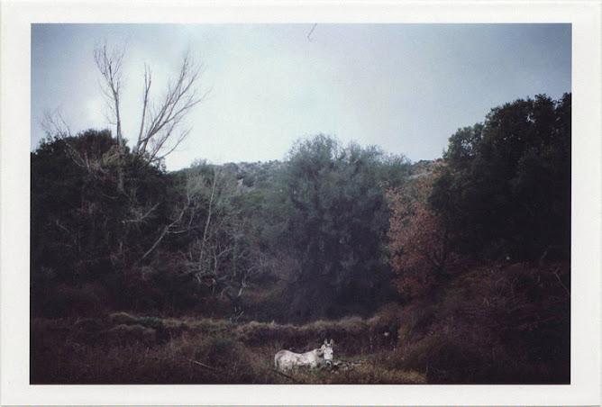 dirty photos - time - cretan landscape photo of donkey near diktaion antron