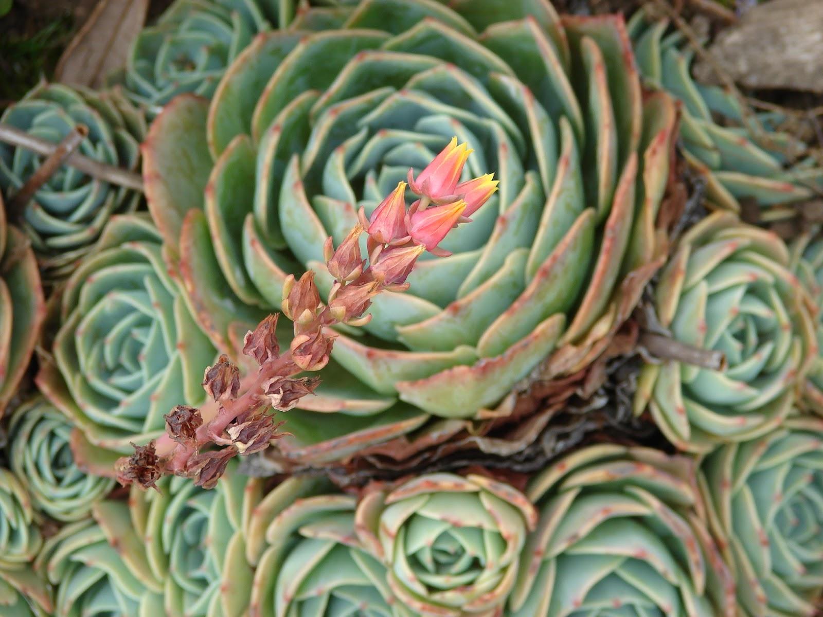 Paisajismo pueblos y jardines marzo 2013 for Plantas exoticas para jardin