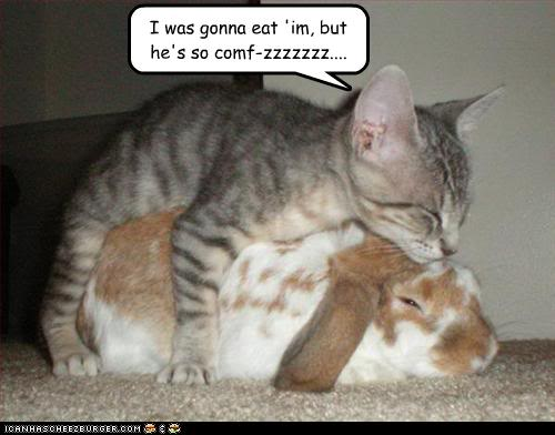 Cute Animal Pictures with Captions Funny Pictures Quotes