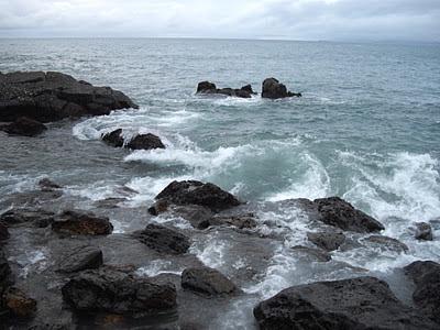 Mojarrilla sabado 21 de enero nada de pescado for Mi pez nada de lado