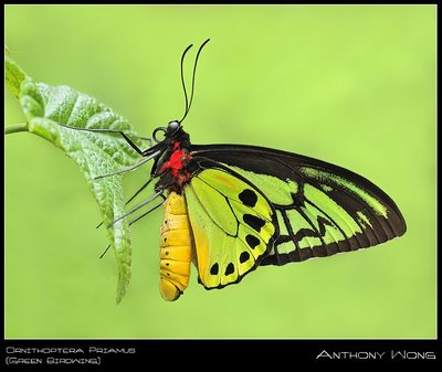 butterfly wallpaper. Colorful Butterfly Close - Up