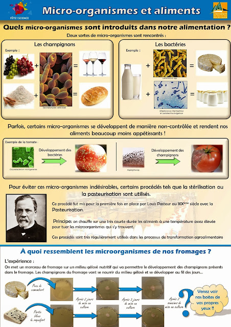 programme 3eme svt - microorganismes bacteries, levure, pourriture, fromage, alimentation