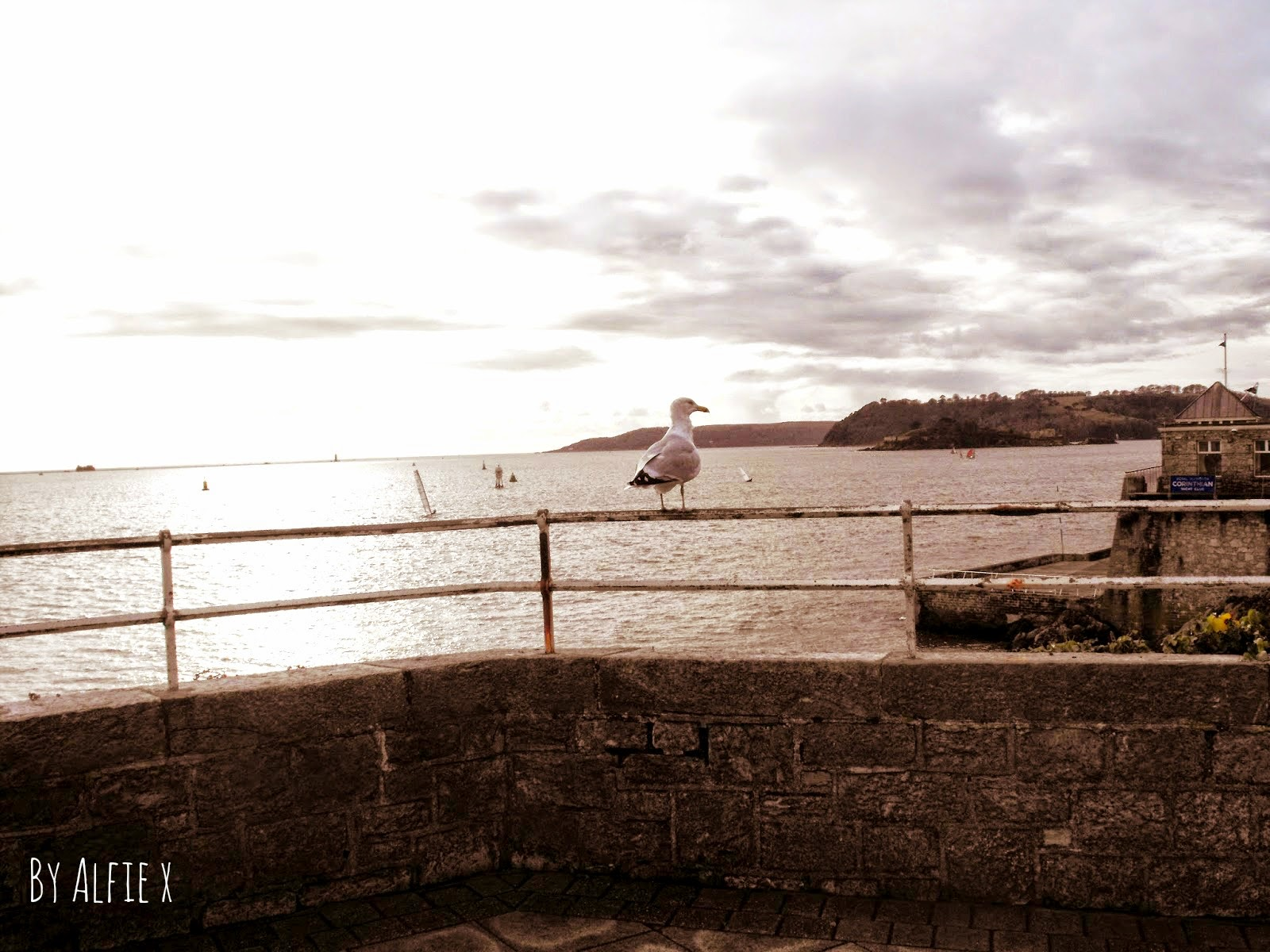 photography photo plymouth seagull hoe barbican devon camera england parent blogger