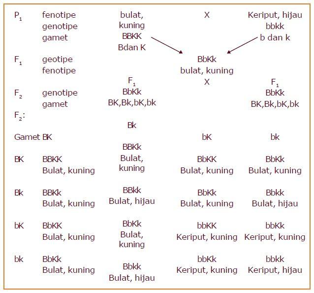 Contoh persilangan monohibrid dan dihibrid berpendidikan dari diagram tersebut dapat dilihat bahwa ada 4 macam fenotipe pada f2 yaitu ccuart Choice Image