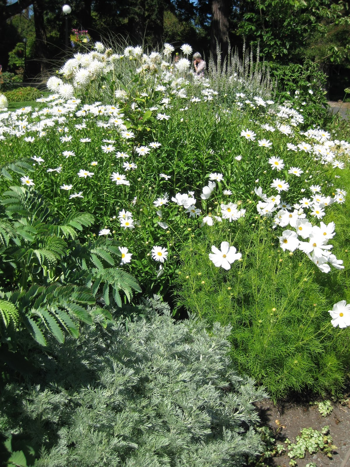 I Also Scoured More Seed Catalogs, Worked On Plant Records And Am  Finalizing My Presentations For The WPT Garden Expo (The Moonlit Garden, The  Vertical ...