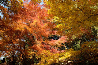 sakura,luruh,salji,summer,empat musim,bunga,