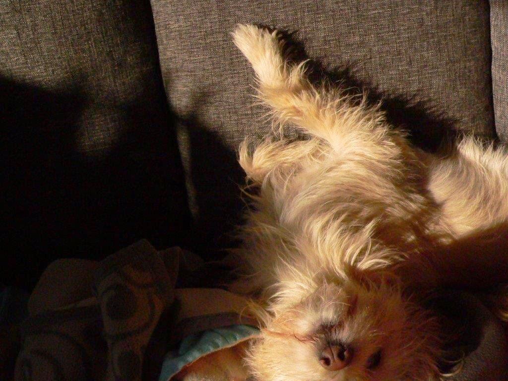 Sofa liegen Hund relaxen Entspannen