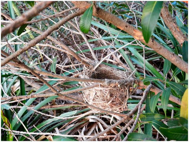 Es maravilloso lo elaborado que son algunos nidos - Chacra Educativa Santa Lucía