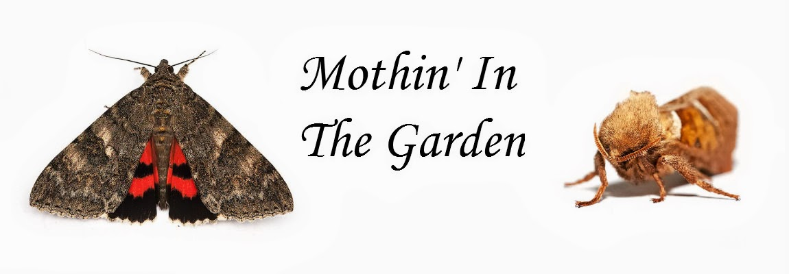 Mothin' in the garden