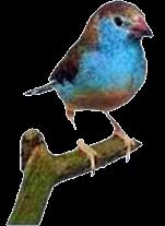 Não mate os passarinhos