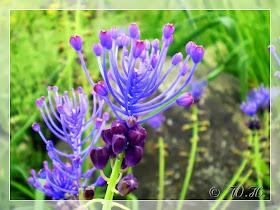 Blumen aus der Gebirgsgegend & Süd bis Nordamerika in meiner Bildergalerie ...