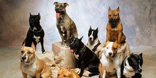 Kebaikan menteri terhadap anjing anjing ganas