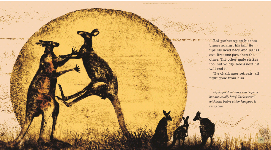 the red kangaroo: macropus rufus essay The red summer refers to the summer and early autumn of  he published his essay returning soldiers:  red kangaroo topic the red kangaroo (macropus rufus).