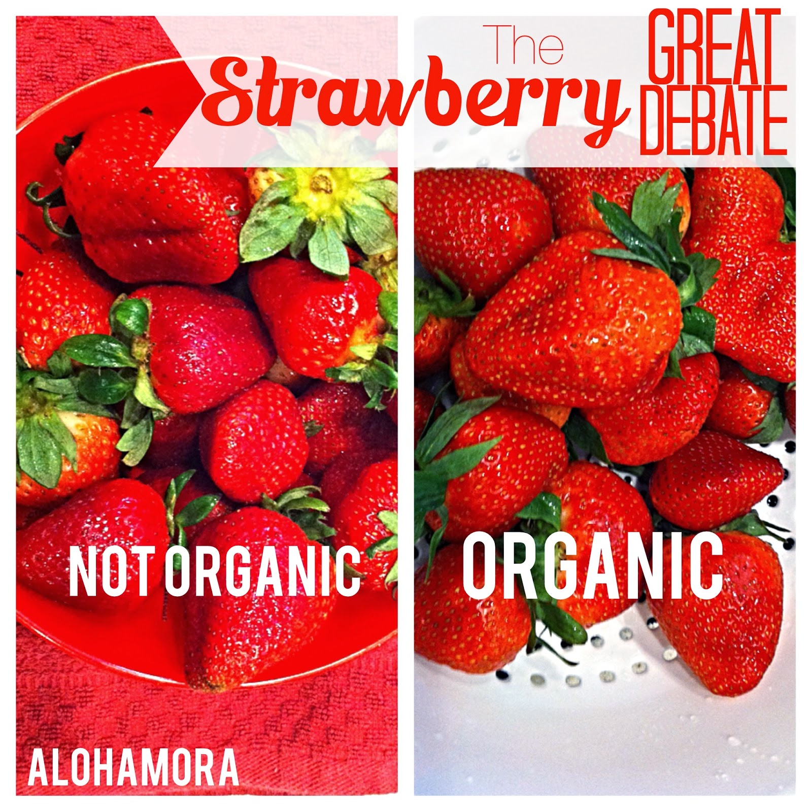 Are organic strawberries worth it?  To buy, or not to buy organic strawberries.... A scientific experiment provides us the answer. Alohamora: Open a Book http://alohamoraopenabook.blogspot.com/