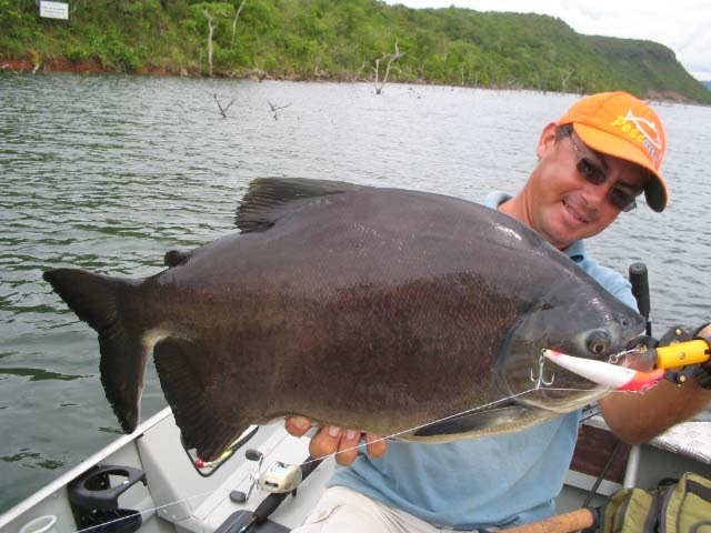 Big fishes of the world pacu black tambaqui colossoma for Largest saltwater fish