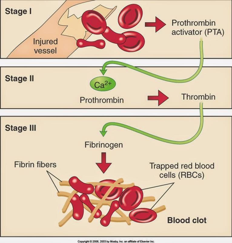 Protein Dalam Diet