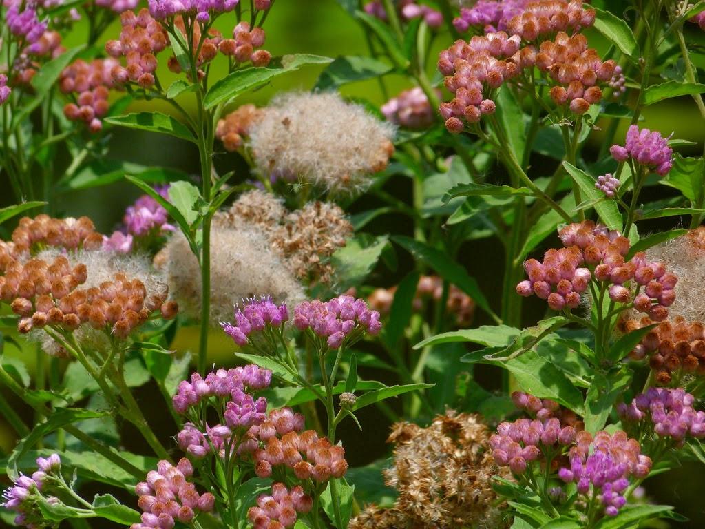 McKee Botanical Gardens Flowers