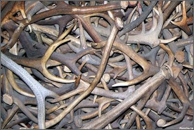 Pabellón de Caza del Parque de El Hosquillo (vista 5)
