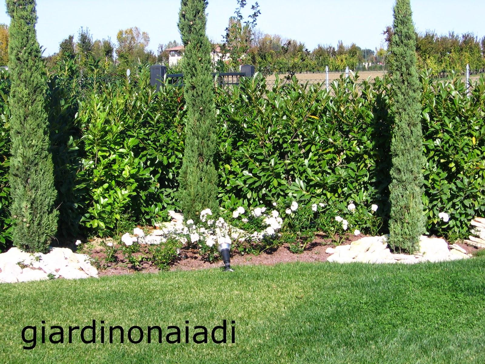Il giardino delle naiadi un giardino al vento for Piante da giardino alte 2 metri