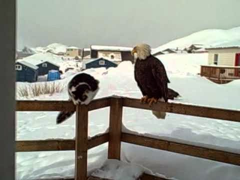 (Daily Cute) Cats Hanging Out with the Eagles (Videos)