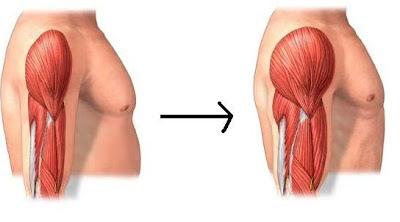 Ejercicio y consumo de proteínas imprescindibles para ganar masa muscular