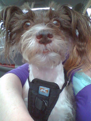 Image of Pixel Blue Eyes Face Close Up Wearing Seat Belt Harness