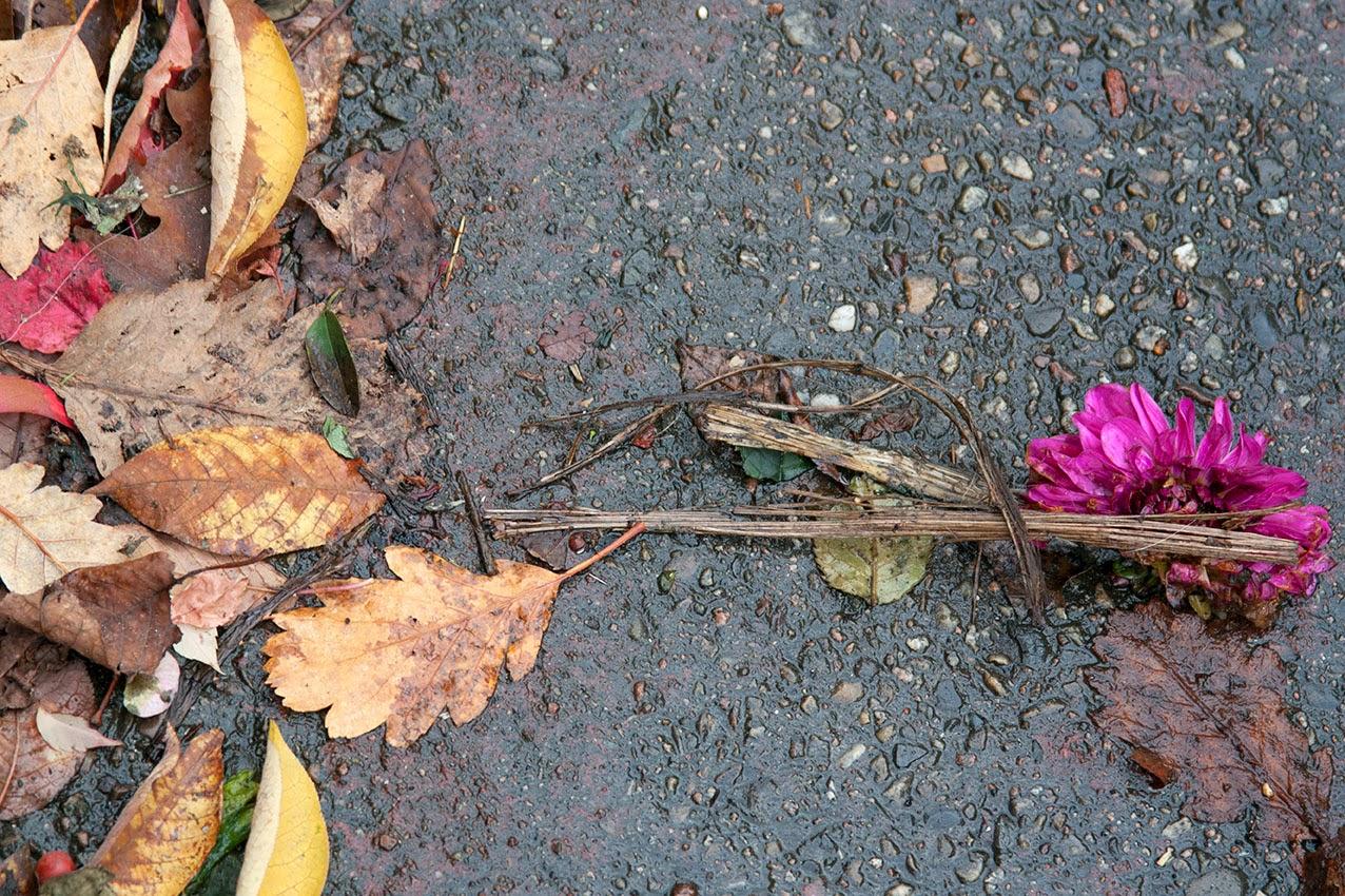 paarse bloem en blaadjes op asfalt