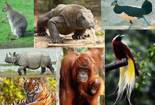 keanekaragaman hayati di indonesia, rangkuman materi, contoh, manfaat