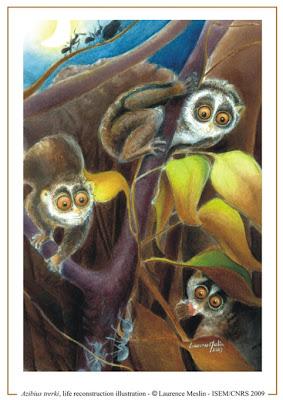Azibius primates del eoceno